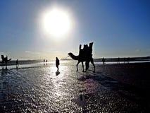 kameel het berijden bij Clifton-strand, Karachi, Pakistan royalty-vrije stock afbeelding