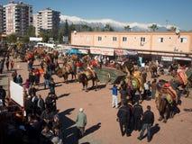 Kameel het worstelen festival Royalty-vrije Stock Afbeelding