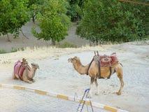 Kameel met de landschappen van de cappadociarots in Turkije Royalty-vrije Stock Afbeeldingen