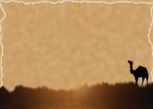 Kameel op de Achtergrond van de Woestijn Stock Foto's