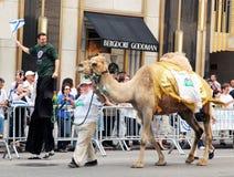 Kameel op de parade van Israël. Royalty-vrije Stock Foto