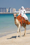 Kameel op Jumeirah Strand, Doubai Royalty-vrije Stock Fotografie
