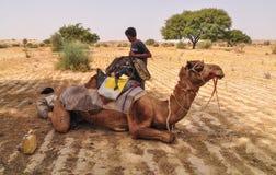 Kameel op woestijn in Jaisalmer, India Stock Afbeelding