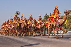 Kameel Opgezette Band op Parade stock foto's