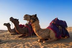 Kameel voor het berijden activiteit in India Royalty-vrije Stock Fotografie