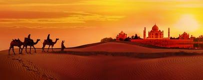 Kameelcaravan die door de woestijn gaan Taj Mahal tijdens zonsondergang stock afbeeldingen