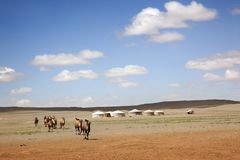 Kameelcaravan mongolië royalty-vrije stock foto's