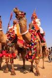 Kameeloptocht bij Woestijnfestival, Jaisalmer, India Stock Afbeelding