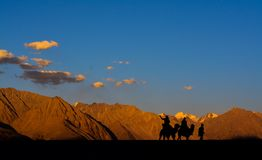 Kameelrit in Nubra-Vallei, Ladakh, India stock foto's