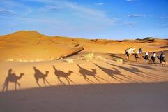 Kameeltrekking in de Marokkaanse woestijn van de Sahara Stock Afbeelding