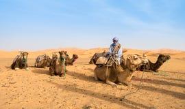 Kamelägare och kamel som väntar på turister Fotografering för Bildbyråer