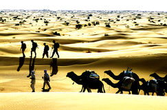 kamelöken fotografering för bildbyråer