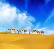Kamel. Ökenlandskap Royaltyfri Fotografi