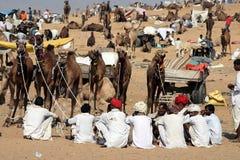 Kamel angemessen, Indien Lizenzfreies Stockbild