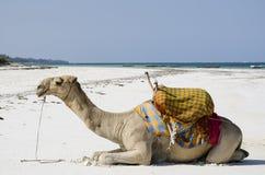 Kamel auf dem Sand lizenzfreie stockfotos
