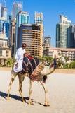 Kamel auf Jumeirah-Strand in Duba Stockfotografie