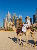 Kamel auf Jumeirah-Strand in Duba Lizenzfreies Stockfoto
