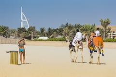 Kamel auf Jumeirah-Strand in Duba Lizenzfreie Stockfotografie
