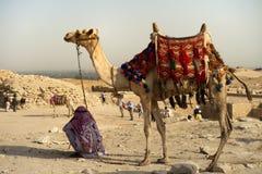Kamel auf Wüste Lizenzfreies Stockfoto