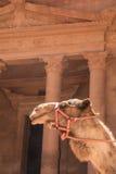 Kamel av den röda staden Fotografering för Bildbyråer