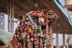 Kamel bei Pushkar Mela (Pushkar-Kamel angemessen), Indien Lizenzfreie Stockfotos