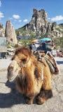 Kamel, damit Touristen ein Foto machen lizenzfreies stockbild