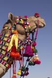 kamel dekorerad indier royaltyfria foton