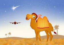 Kamel in der Wüste stock abbildung