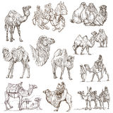Kamel - en hand dragen packe original Arkivfoton