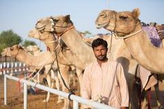 Kamel för klubba för springa för Dubai kamel som väntar för att springa med vårdaren Fotografering för Bildbyråer