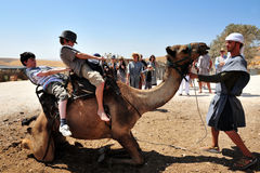 Kamel-Fahr-und Wüsten-Tätigkeiten in der Judean-Wüste Israel Stockfoto