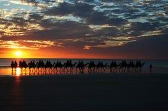 Kamel-Fahrsonnenuntergang-Seilzug-Strand Lizenzfreie Stockfotos