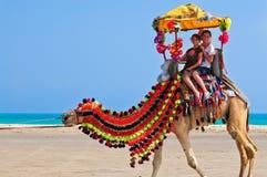Kamel-Fahrt Stockbilder