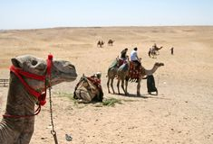 Kamel-Fahrt Lizenzfreie Stockfotos
