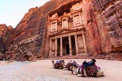 Kamel framme av kassan på Petra den forntida staden Al Kh Royaltyfri Bild