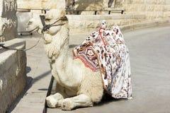 Kamel gegen die alte Stadt von Jerusalem Stockbild