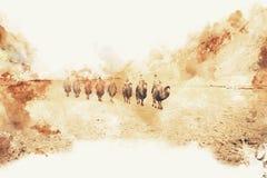Kamel i ökenvattenfärgmålningen på vita bakgrundswi vektor illustrationer
