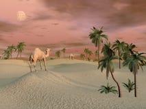 Kamel i öknen - 3D framför Royaltyfri Fotografi