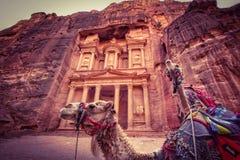 Kamel i Petra royaltyfria bilder