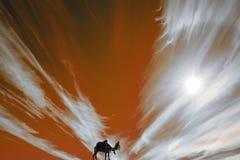 Kamel im Geschirr Schattenbild Stockbild