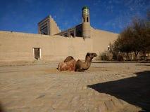 Kamel in Khiva, die historische Stadt von Usbekistan lizenzfreies stockbild