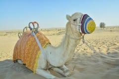 Kamel kleidete in der bunten Kleidung in der Wüste an Lizenzfreie Stockfotos