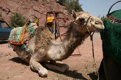 Kamel in Marokko Lizenzfreie Stockfotografie