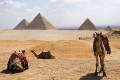 Kamel mit Pyramide Lizenzfreie Stockfotos