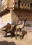 Kamel mit Wagen Lizenzfreies Stockbild