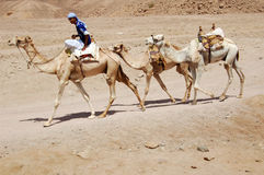 Kamel-Mitfahrer Lizenzfreies Stockbild