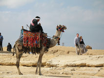 Kamel-Mitfahrer Lizenzfreie Stockbilder