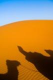 kamel morocco som trekking Arkivbilder