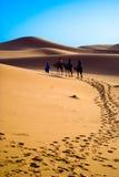 kamel morocco som trekking Royaltyfria Bilder