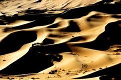 Kamel och öken Royaltyfri Bild